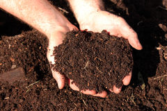 Horse Manure Compost Stock Images