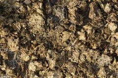 Horse manure Stock Image