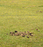 Horse manure in a green field Stock Image