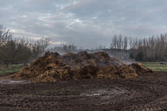 Horse Manure Pile Royalty Free Stock Photography