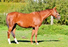 Horse, Mare, Mane, Horse Like Mammal Stock Images