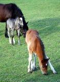Horse mare pasture Stock Photo