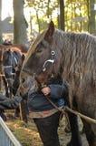 Horse market Royalty Free Stock Image