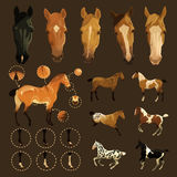 Horse markings Stock Photography