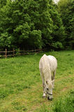Horse in meadow Royalty Free Stock Photography