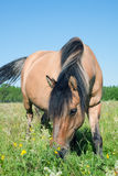 Horse on a meadow Stock Image