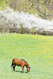 Horse on meadow Stock Images