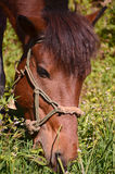 Horse on meadow Royalty Free Stock Image