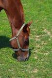 horse meadow Στοκ Εικόνες
