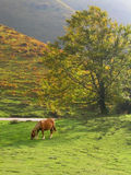 Horse on the meadow. Horse grazing on a beautiful meadow in a misty morning Royalty Free Stock Images