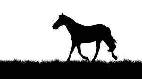 Horse on a meadow. A vector horse trotting on the meadow Royalty Free Stock Photos