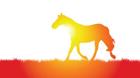 Horse on a meadow. A vector horse trotting on the meadow Stock Photo