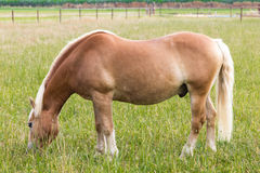 Horse on meadow animal domestic Royalty Free Stock Photo