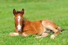 Horse on a meadow Stock Photos