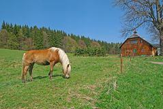 Horse,  meadow, cottage. Horse  on a green meadow, wooden cottage, trees and sky on the background Stock Photography
