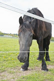 Horse in a meadow Stock Image