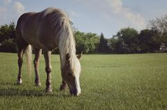 Horse. On the meadow eating the grass Stock Image