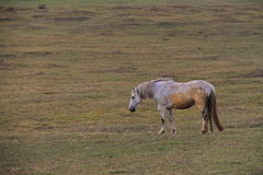 Horse on meadow Royalty Free Stock Images