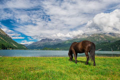 Horse in a meadow in front of an alpine lake Stock Photo