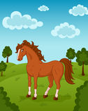 Horse on meadow. Illustration of brown horse on meadow Royalty Free Stock Photography