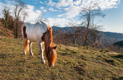 Horse in the meadow mountain Royalty Free Stock Photography