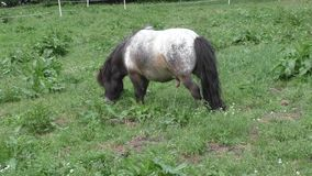 Horse in meadow stock video