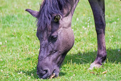 Horse on a meadow. Portrait of a horse on a meadow Royalty Free Stock Images