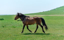 Horse in the Meadow Stock Photos