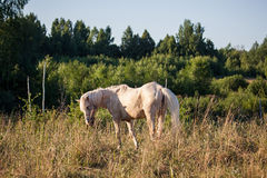 Horse in the meadow Stock Images