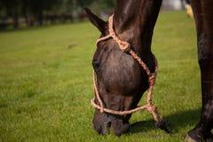Horse meadow Royalty Free Stock Photos