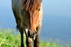 Horse Royalty Free Stock Photo