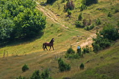Horse on a meadow at sunny summer day in Pester Stock Photography