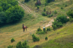 Horse on a meadow at sunny summer day in Pester Stock Photo