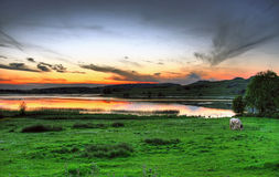 Horse meadow at sunset. Lough Gur - irish lake and horse meadow Stock Photo