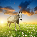 Horse in the meadow Stock Image