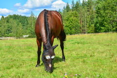 Horse on meadow. Wearing funny fly mask Stock Photo