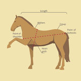 Horse with measurement labels. Silhouette of a horse with measurement labels royalty free illustration