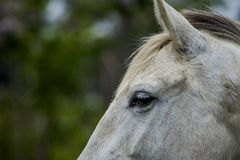 Horse meditation Royalty Free Stock Photography