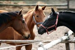 Horse meeting Stock Photo