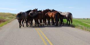 Horse meeting. Stock Photo