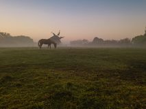 Horse and mill in foggy morning on the field. calm sad depressive mystical atmosphere. Countryside autumn morning. Fog and sunrise. Horse and mill in foggy stock photography