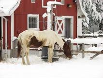 A horse at Milwaukee Zoo in winter season stock photo