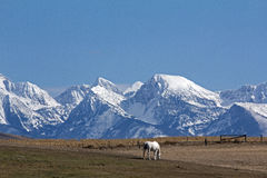 Horse and Mission Mountains Stock Photo