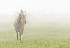 Horse in the mist Stock Photos