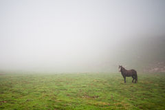 Horse in the mist. A horse in the mist in Pirineos (Spain Stock Image