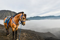A Horse with the mist in Bromo Stock Photos