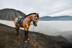 A Horse with the mist in Bromo Royalty Free Stock Images