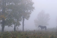 Horse in the Mist Royalty Free Stock Photography