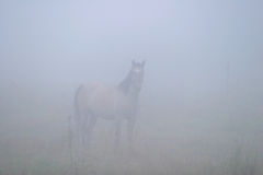 Horse in the Mist Royalty Free Stock Image