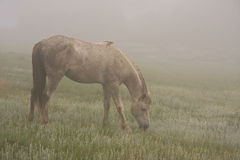 Horse mist wild Royalty Free Stock Photography